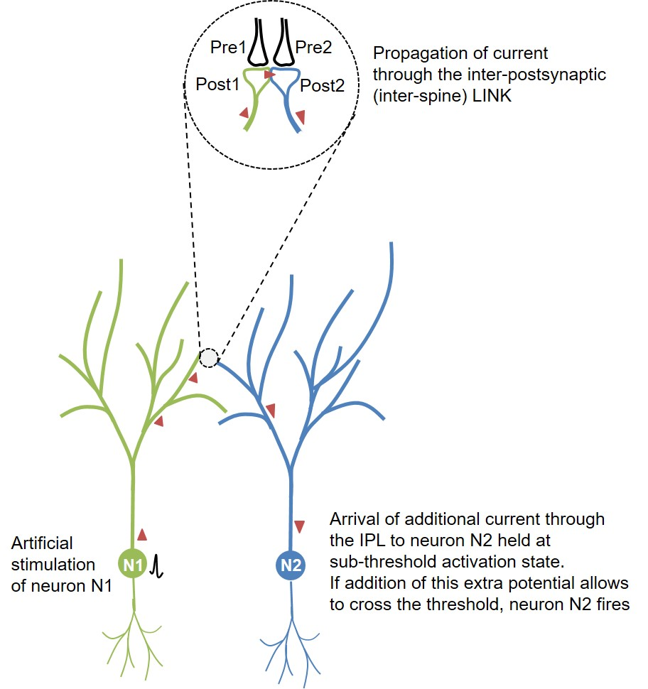 Lateral propagtion of current in a cortical layer